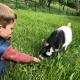 … Ziegen füttern