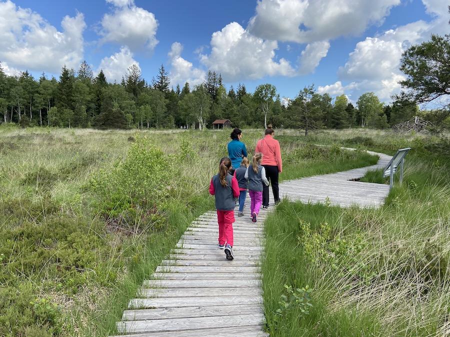 Los gehts auf Holzwegen durch Hochmoor im Wurzacher Ried (Foto: privat Familie Daiber)